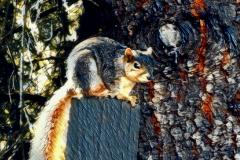Spectral-Squirrel