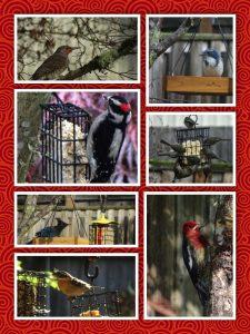 The art of feeding birds